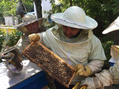 Bg qualityhoney - BG Quality Honey - Ловеч